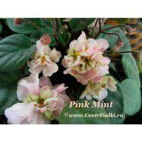 Pink Mint (S. Sorano)